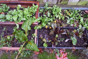 garden 1c