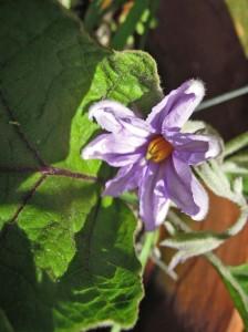 ripening 1f