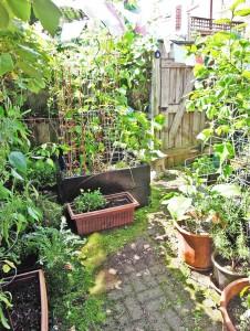 garden 1e