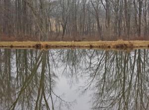 pond 1b