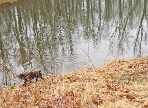 pond 1g