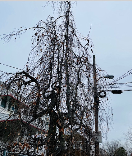 Photo of tangled tree branches and phone wires in an urban alley