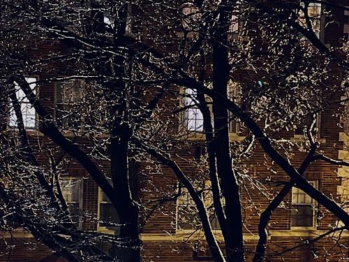 Night Photo of Ice on Bare Trees in Urban Scene