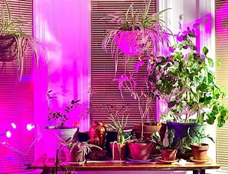 Photo of indoor houseplants.