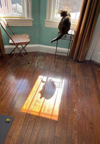 Image of Maitri the cat perched on a plant stand in front of the window and the shadow on the floor